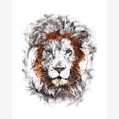 Lionking Adult 1 green eyes © Tobias Schreiber.jpg